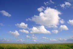 Blue sky in Florida Everglades wetlands green plan stock photo