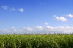 Blue sky in Florida Everglades wetlands green plan Royalty Free Stock Photography