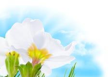 Blue sky flower and sun spring border stock photos
