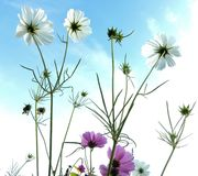 Blue sky with flowers Stock Images