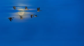 Blue sky with flying birds panoramic view Stock Image