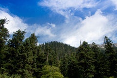 The blue sky, the forest Stock Photos