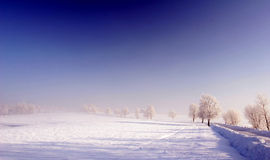 Blue sky and frozen meadow Royalty Free Stock Photos