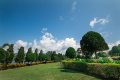 Blue sky and garden Stock Image