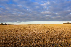 Blue sky and golden staw. A field of golden straw stubble on a hillside under a blue patterned sky in a yorkshire wolds landscape in autumn Royalty Free Stock Photography