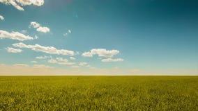 Blue sky golden wheat stock video footage