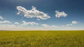 Blue sky golden wheat stock video