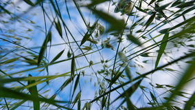 Blue sky through the grass. View to the sky from the ground Royalty Free Stock Photography