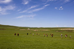 Blue sky and grassland Royalty Free Stock Photos
