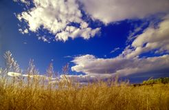 Blue sky grassy field. Grassy field with blue sky and dreamy clouds, in autumn Stock Images
