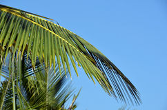 Blue sky with green big palm leaf detail photo Stock Photography