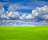 Blue sky and green field Royalty Free Stock Image