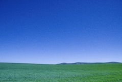 Blue sky green crops Stock Images