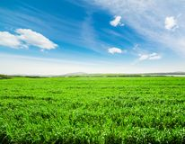 Blue sky and green field in the springtime. Sardinia Stock Image