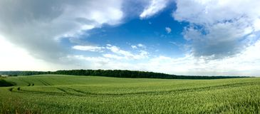 Blue Sky green field Stock Photography