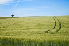 Blue sky, green fields Royalty Free Stock Photos