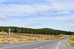 Blue sky. Green Forest. Gray asphalt. Road. Blue sky. Green Forest. Gray asphalt. Long road. Beautiful landscape Royalty Free Stock Photography
