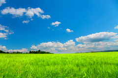 Blue sky, green grass Stock Photo