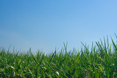 Blue sky and green grass Stock Images