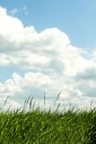 Blue sky. And green grass Stock Photography