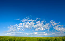 Blue sky green grass Royalty Free Stock Image