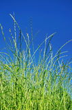 Blue sky and green grass Stock Photos