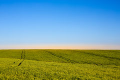 Blue sky and green grass. With the sun between royalty free stock image