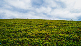 Blue sky and green grass Royalty Free Stock Images