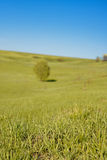 Blue sky with green grass and tree Stock Photos