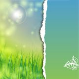 Blue sky, green grass Royalty Free Stock Photo