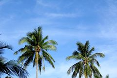 Blue sky with green leaf palm Royalty Free Stock Images
