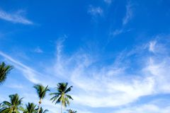 Blue sky with green leaf palm Stock Photos