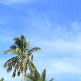 Blue sky with green leaf palm and cloud Stock Photo