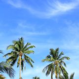 Blue sky with green leaf palm and cloud Stock Photos
