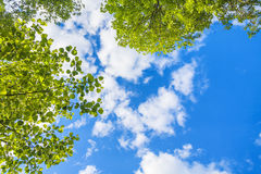 Blue sky and green leaves. Beautiful blue sky with white clouds and green leaves looking up stock image