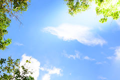 Blue sky with green leaves frame background.  Royalty Free Stock Photo
