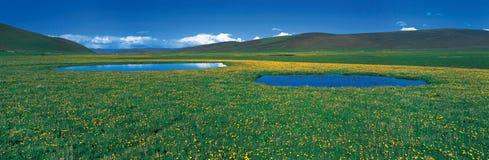 Blue sky green meadow Stock Photos