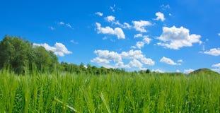Blue sky green meadow field panorama Royalty Free Stock Photos