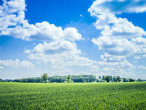 Blue sky green meadow Royalty Free Stock Photo