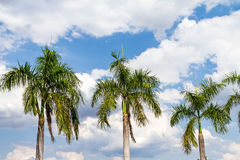 Blue sky and green palm tree  background Stock Images