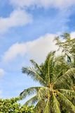 Blue sky. Green palm trees on shore Royalty Free Stock Images