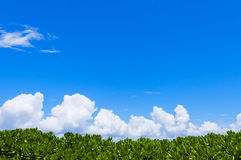 Blue Sky and Green plant Stock Photos