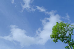 Blue sky and green tree. Natural have big tree in the rain forest and blue sky Stock Images