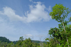 Blue sky and green tree. Natural have big tree in the rain forest and blue sky Stock Photography