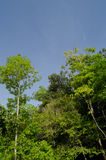 Blue sky and green tree. Natural have big tree in the rain forest and blue sky Royalty Free Stock Image