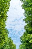 Blue sky and green trees Stock Photo