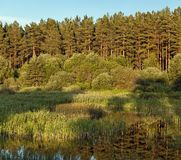 Blue sky, green wood, lake and meadow Stock Photography