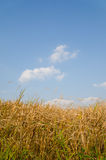 Blue sky and hay Stock Photography