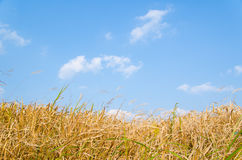 Blue sky and hay Stock Photo