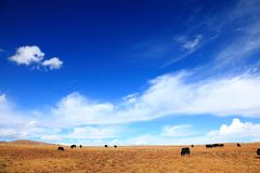 The blue sky on the highland Royalty Free Stock Images